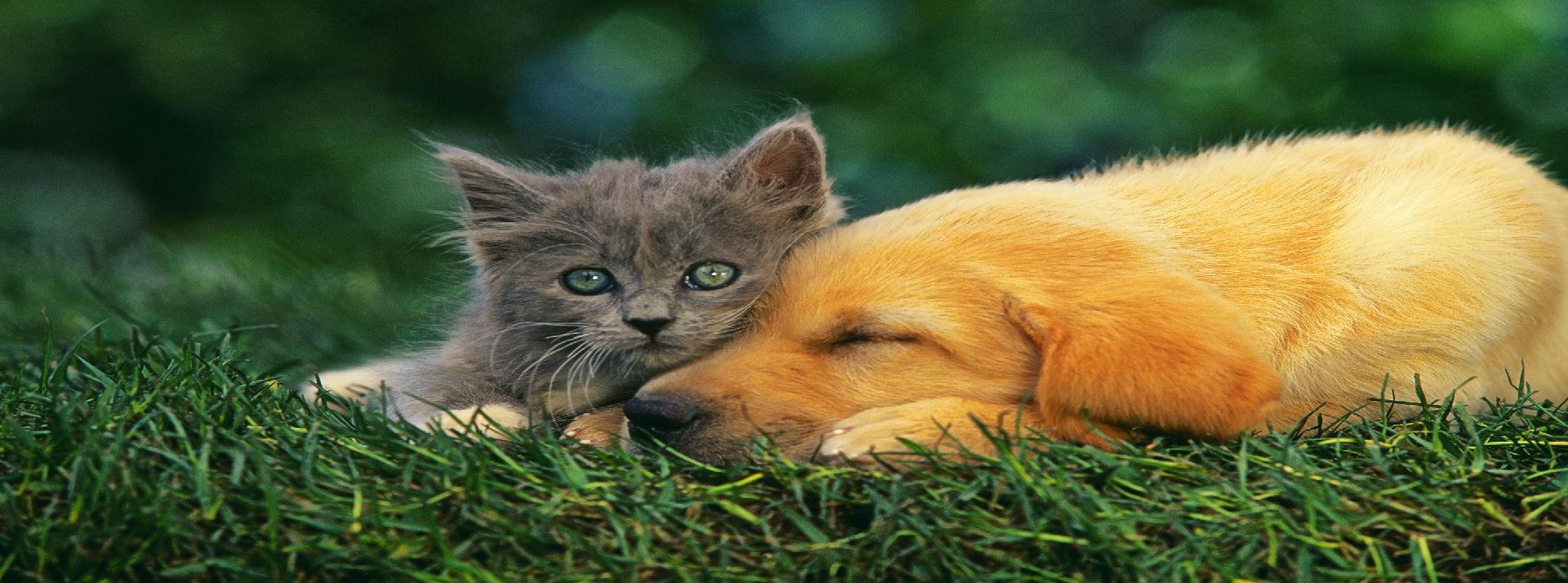 Associação Madeira Animal Welfare