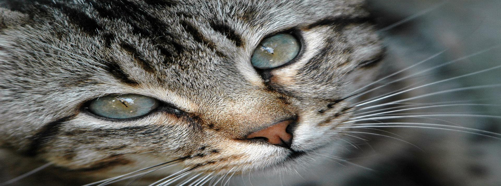 Contribua na esterilização de uma colónia de gatos